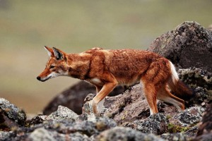 AMG-Tour-and-car-rental-gallery-endemic-animal2