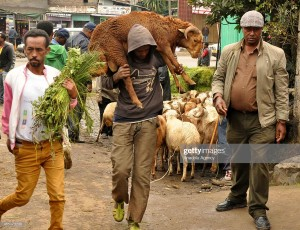 ADDIS ABABA, ETHIOPIA - SEPTEMBER 10:  An Ethiopian with his relatives carries a lamb during the preparations of new year at a local livestock market in Addis Ababa, Ethiopia on September 10, 2014. Ethiopia will mark the arrival of 2007 on September 11 according to a unique calendar. The streets are now packed with people shopping for live lambs, roosters, among other things. (Photo by Kinfemichael Habetemariam/Anadolu Agency/Getty Images)